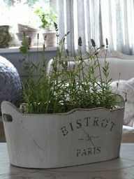 Vintage bucket and lavender, can it get any better?