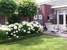 hydrangea garden care schne we - gardencare Hydrangea Landscaping, Hydrangea Garden, Garden Shrubs, Front Yard Landscaping, Landscaping Ideas, Garden Plants, Landscaping Shrubs, Landscaping Software, Inexpensive Landscaping
