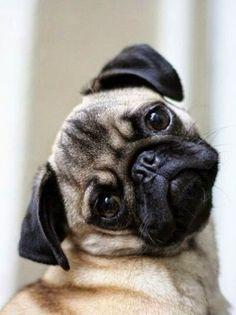 Top 5 Amazing Bulldog Puppies