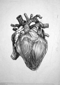 Heart anatomical