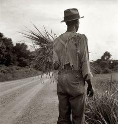 Dorothea Lange: Mississippi Cotton Patch, 1936