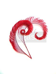 RUBY RED Curled Peacock Sword Tail Feathers (12 FEATHERS) for wedding bouquets, center pieces, invitations and scrapbooking. $12.00, via Etsy.