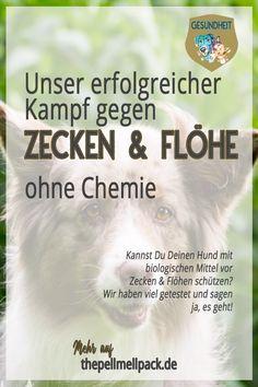 Mittel gegen Flöhe und Zecken auf natürlicher Basis. Ohne Chemie geht es auch. #hund | #hundepflege| Mittel gegen Zecken und Flöhe | Nachhaltigkeit | gesunder Hund | thepellmellpack.de