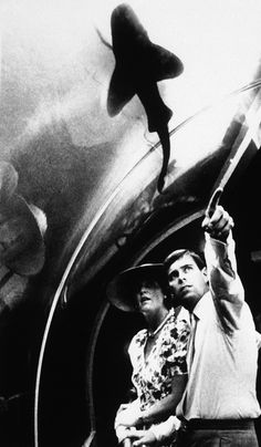 Prince Andrew the Duke and Sarah Duchess of York look at the display in the Shark Tank at Tounsvilles Greta Barrier Reef-Wonderland in Australia on Oct. 3, 1988. The huge tank holds several 2-3 meter Sharks and features a walk under dome. (AP Photo) via @AOL_Lifestyle Read more: http://www.aol.com/article/2014/06/10/something-in-the-ocean-is-eating-great-white-sharks/20910101/?a_dgi=aolshare_pinterest#fullscreen