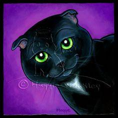 """Maverick"" Scottish Fold Cat by Maggie Weakley MaggiesAngels.com"
