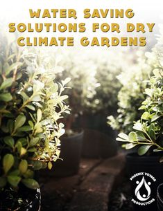 Solutions for saving water for gardening: eBook release! Grow Organic, Organic Plants, Save Water, Edible Garden, Water Garden, Gardening, Lawn And Garden, Vegetable Garden, Vegetable Gardening