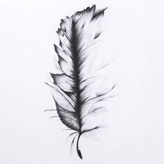 feather quill pen drawing - Google Search
