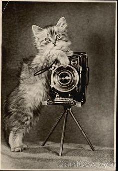 Fluffy Kitten Holding a Camera