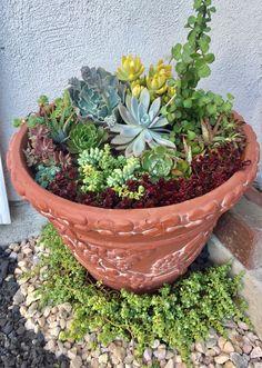 Terrarium, Succulents, Landscaping, Mini, Plants, Terrariums, Succulent Plants, Planters, Landscape Architecture