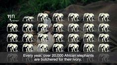 WWF-Thailand: Thais sacrifice their good name for elephants