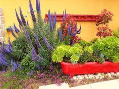 Garden detail Rent A Villa, Portugal, Detail, Garden, Plants, Garten, Lawn And Garden, Gardens, Plant