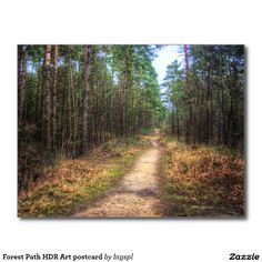 Forest Path HDR Art postcard