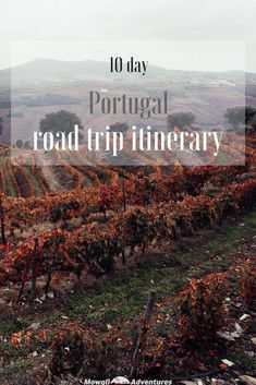 This detailed northern Portugal road trip itinerary & guide has the top places to go, great routes ideas and practical planning tips. #RoadTrip #Portugal Read the full article here: http://mowgli-adventures.com/portugal-road-trip-itinerary/