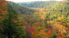 Ohio's Mohican State Park is comprised of 1,110 acres with 5 miles of the scenic Clear Fork Branch of the Mohican River running through it. The park's Hemlock Gorge Trail includes a covered bridge, two waterfalls, hemlock-lined ravines, a rare stand of white pines and a bubbling stream, the Clear Fork of the Mohican River.