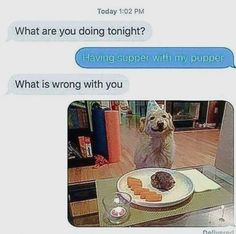 Check some of the funniest text messages on the web. We compiled 40 hilarious texts sent from parents and neighbors. Don't miss all the cringy texts and funny conversations. Sit down and relax with the funniest text messages on Pinterest. #funnytexts #humor #textmessages Memes Funny Faces, Funny Dog Memes, Funny Animal Memes, Funny Animal Videos, Funny Texts, Funny Animals, Funny Pugs, Animals Dog, Funny Kitties