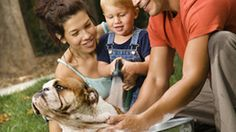 """""""Smelly dog, smelly dog, what are they feeding you? Smelly dog, smelly dog it's not your fault!"""" 5 reasons your smelly dog may be in danger. Smelly Dog, Toddler Development, The Deed, Dog Facts, Cat Fleas, Dog Grooming, Dog Owners, Toddler Activities, Pet Care"""