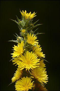 Ramillete de flores amarillas.