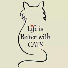 Sure Is!! #Ilovecats #catsrule #Ilovemycat #lovecats #tis4theloveofcats #catsrule #catsruletheworld #quote #quotes #animal quotes #companionship #goodcompany #cute #catsofinstagram #instagood #followme #mondaymorning