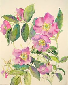 watercolor paintings of wild roses | Images may not be reproduced in any form without the express ...