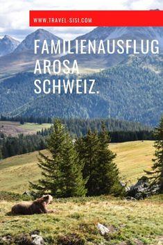 Das Bärenland in Arosa im Schweizer Kanton Graubünden ist eine wunderbarer Ausflugstipp für die ganze Familie. Es gibt zahlreiche schöne Aktivitäten, die sich mit dem Besuch des Bärenlands in Arosa verbinden lassen für einen tollen Tag in den Schweizer Bergen. Kanton, Bergen, Mountains, Nature, Travel, Globe, Swiss Guard, Tourism, Viajes