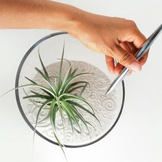 Large Air Plant Zen Garden by wendiland on Etsy