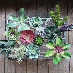 This new line of faux succulents will change the way you garden. In fact, you don't ever need to garden again if you don't want to! You don't need to water them