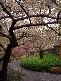 Brooklyn Botanic Garden's 100th Anniversary | Garden Design