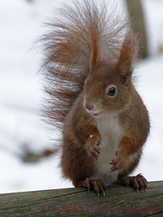Squirrel in the wind!