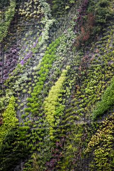 Patrick Blanc Vertical Gardens #details #closeup #vertical #garden #paris