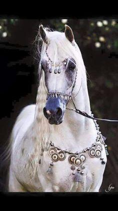 Arabian dressed in Bedouin jewelry