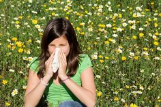 Ten Natural Allergy Relief Tips Offered by a naturopathic physician, this advice may help you alleviate the misery of spring allergies. Spring Allergies, Les Allergies, Seasonal Allergies, Pollen Allergies, Allergy Relief Tips, Natural Allergy Relief, Therapeutic Essential Oils, Essential Oil Blends, Grass Allergy