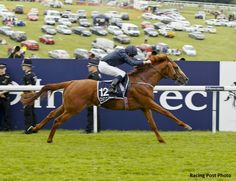 Investec Derby (Eng-I) winner Ruler of The World will face eight rivals as he tries to remain undefeated in Saturday's Dubai Duty Free Irish Derby (Ire-I) at the Curragh.