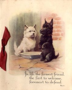 Clare's creations: Some real vintage cards Pet Dogs, Dogs And Puppies, Chihuahua Dogs, Doggies, Le Clan, White Terrier, Terrier Mix, West Highland Terrier, Vintage Dog