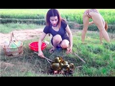 Wow Amazing Cute Girl Grill village Snails On Rice Fields - Easy to Catc...