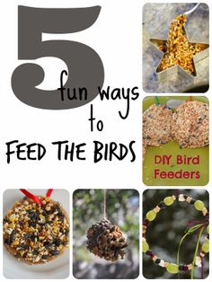 It's a Long Story: 5 Fun Ways to Feed the Birds