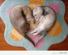 that's so cute and I have 3 ferrets