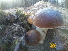 Atlas grzybów na Kaszubach