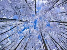 Fotografía de Martin Hertel  Un bosque de Hayas en el invierno de Bavaria, en Alemania.   Foto: National Geographic