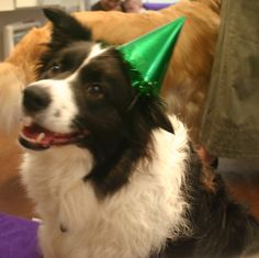 """""""Late St. Pat's pic of Scouty."""""""