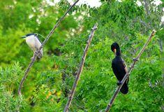 Night Heron and Cormorant at Glenmere Park in Greeley, Weld County, Colorado. Arapahoe Indians, State Birds, Blue Heron, Bird Species, Colorado, Island, Park, Night, Animals