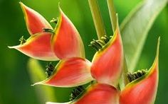 Image result for Tropical flowers