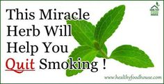 This Herb Will Help You Quit Smoking ! | Healthy Food House