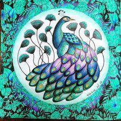 Super super super lindo!!!!! @Regrann from @fanow -  #milliemarotta #colorsbook #colouring #coloringbook #colorindooinstagram #coloriagepouradulte #colorindo #coloriagenostress #esrarengizbahçe #eläintenvaltakunta #florestaencantada #inspirational #instacoloring #artecomoterapia #colorido #cores #jardimsecreto #terapia #livrosdecolorir #arteantiestresse #colorful #paintingbook #pavão  #tropicalwonderland #reinoanimal #animalkingdom #sharedloveofanimalkingdom #therapy #Regrann