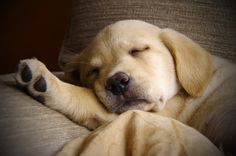 You've Adopted a Puppy. Now What? - Top Dog Tips