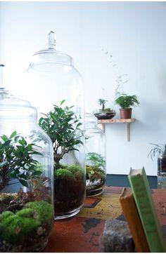 Greenfactory, jardins de verre