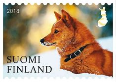 Postage Stamps, Finland, Flora, Dogs, Animals, Life, Design, Stamps, Animales