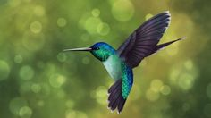 Hummingbirds are one of the most beautiful, cutest and smallest birds in the world. Description from ohmygodfacts.com. I searched for this on bing.com/images