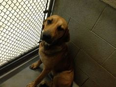 URGENT- HARRY  IS IN A GASSING SHELTER IN BECKLEY WEST VIRGINIA. PLEASE EMAIL DOGHOUSE100@COMCAST.NET FOR DOGGY DETAILS AND APPLICATION. HARRY IS 44 POUNDS AND 8 MTHS OLD.TRANSPORT IS AVAILABLE FOR ALL APPROVED OUT OF STATE ADOPTIONS. THIS SHELTER...
