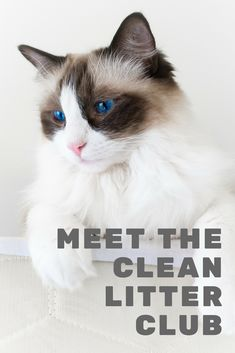 Come meet the Clean Litter Club! Makers of Siftease!          #cat #bestmeow #cats #kitten #catlover #catoftheday #kitty #meow #lovecats #kittens #cateducation #funnycats