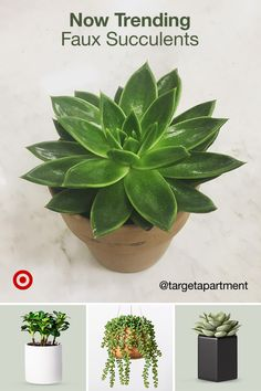 Faux succulents are an easy way to green up your office or home decor for a quick refresh no watering needed. Faux succulents are an easy way to green up your office or home decor for a quick refresh no watering needed. Faux Succulents, Faux Plants, Planting Succulents, Indoor Plants, Cactus Flower, Flower Seeds, Cactus Plants, Flower Pots, Artificial Flowers And Plants